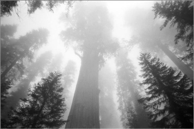 The Grove - Tree